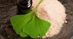 Le ginkgo biloba : un arbre aux 1 000 vertus ?!