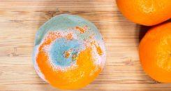 Norovirus, salmonelles, etc. : bilan annuel des infections d'origine alimentaire