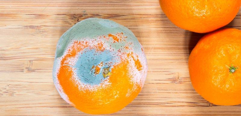 moisissures sur une orange et risque de salmonelles