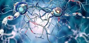 Maladie de Parkinson : un coupable nommé calcium ?