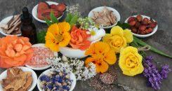 Plantes et médicaments : des liaisons parfois dangereuses !
