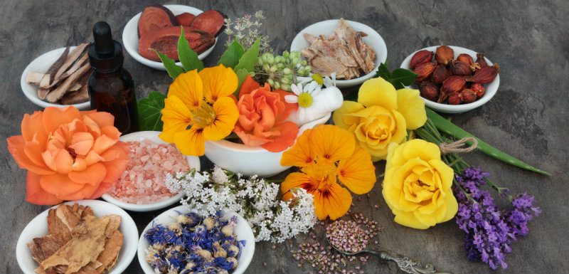 plantes et médicaments