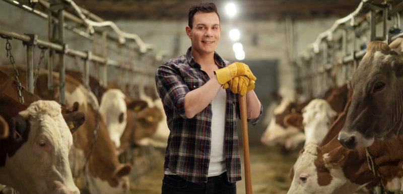 un agriculteur dans une grange avec des vaches. Agriculteurs