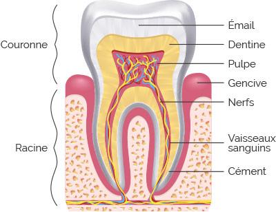 nevralgie dentaire traitement