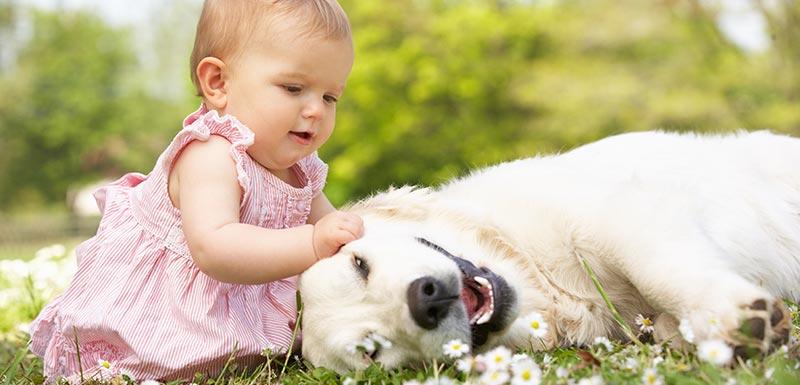 Bébé assis sur l'herbe en compagnie d'un chien