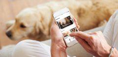CLEO : un compagnon digital de la SEP au quotidien