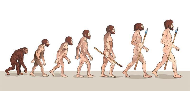 évolution de l'être humain