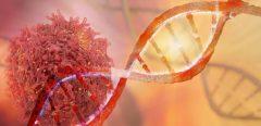 Un mécanisme de neutralisation des tumeurs vient d'être découvert !
