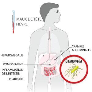symptômes salmonellose