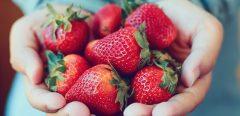 Les fraises pour prévenir les maladies inflammatoires de l'intestin ?