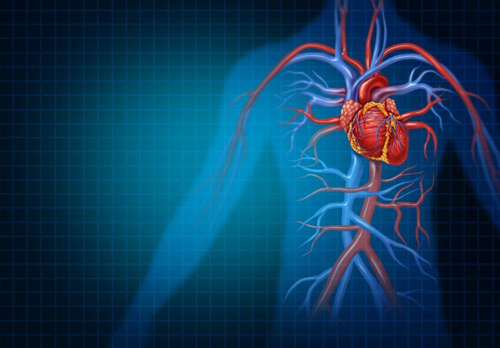 artères