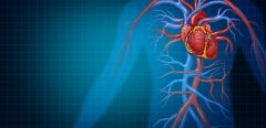 Une découverte clef pour préserver la santé de nos artères