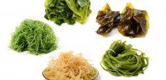 Des algues au menu : bonne ou mauvaise idée santé ?