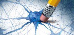 Maladie d'Alzheimer : un espoir de traitement nommé caspase