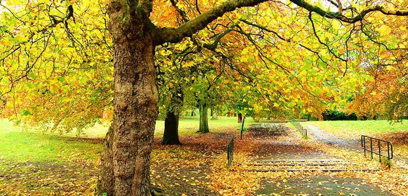 Une forêt en automne