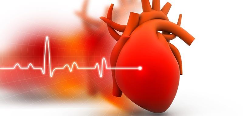 DWORF, une nouvelle molécule contre l'insuffisance cardiaque