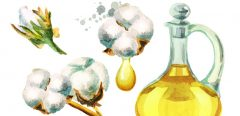 De l'huile de coton pour faire baisser le cholestérol