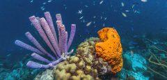 Plongée au cœur de la super molécule anticancéreuse des fonds marins