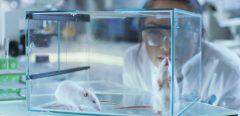 Le rat taupe nu : une longévité exceptionnelle, sans cancer ni douleur !