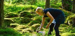 Vigilance cueillette de champignons : des intoxications en hausse