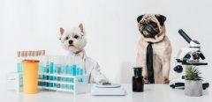 Du rat au poisson : ces animaux de laboratoire qui testent nos médicaments