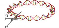 Les « ciseaux génétiques » ou technique CRISPR-CAS9 : un pas vers la thérapie génique ou un risque majeur de dérive ?