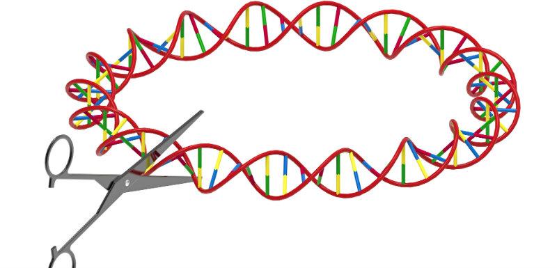 des ciseaux génétiques de la thérapie génique