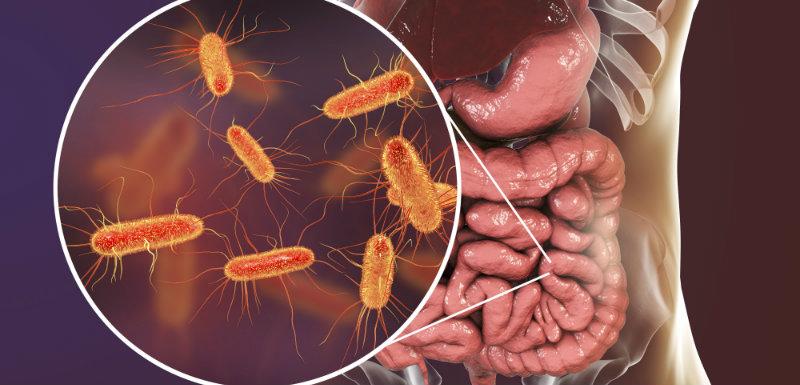 microbiote sanguin, bactéries et intestin