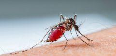Les nouveaux traitements contre le paludisme