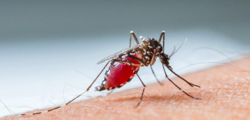 Un moustique vecteur du paludisme