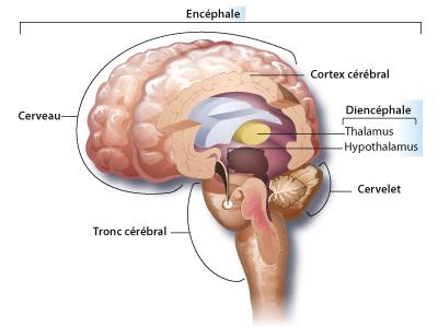 Encephale et traumatismes crâniens