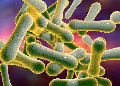 Bacille de Klebs-Löffler à l'origine de la diphtérie