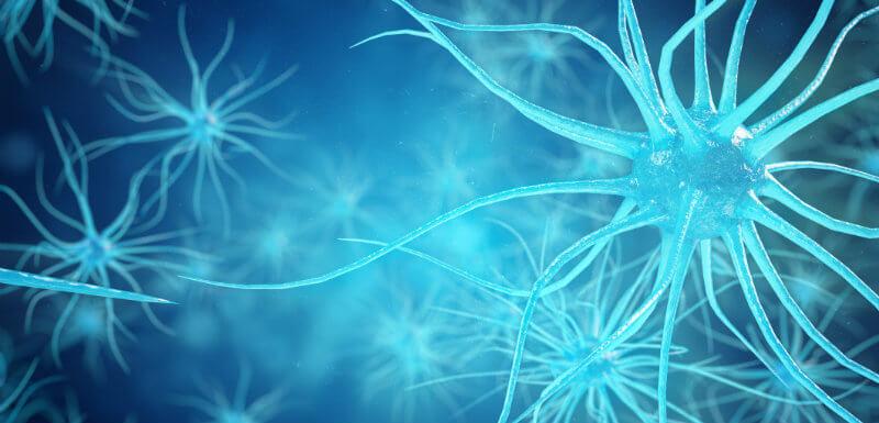 Neurones pouvant être atteints par la maladie de Charcot-Marie-Tooth