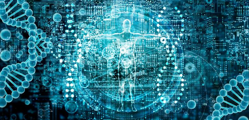 génome humain corps et ADN humain