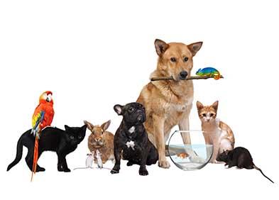 Illustration symbolisant la Zoothérapie