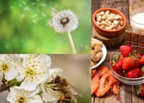 bilan-allergologique-pollens