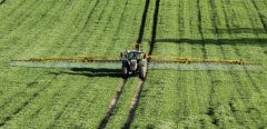 Stéatose du foie (NASH): un lien avec l'herbicide glyphosate