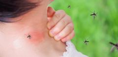 Paludisme : une molécule d'intérêt trouvée dans le Grand Nord canadien