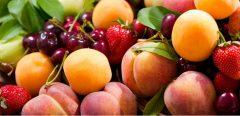 Cerises, pêches, abricots, … de quels fruits se régaler cet été ?