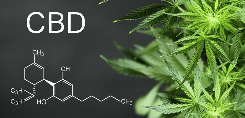 Dépendance au cannabis: découverte d'un gène de sensibilité