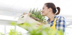 Herbes aromatiques: quels sont leurs bénéfices sur la santé ?