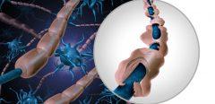 Quels immunosuppresseurs contre les formes très actives de SEP ?