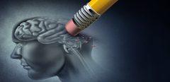 Perte de mémoire liée à l'âge : découverte du rôle clef du calcium