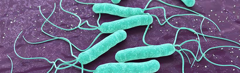 Bactérie Helicobacter pylori 3d