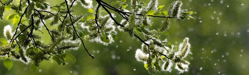 Pollen-allgergie-header