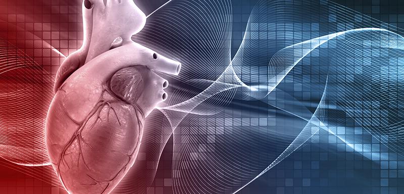 Cœur médical en 3D pour tester infarctus du myocarde avec déoxydihydrocéramide