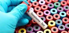 La prévention française de la toxoplasmose, un modèle ?!