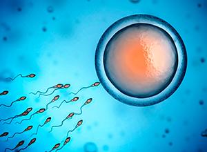 Sperme et œufs Cellule pour bilan hormonal d'infertilité féminine