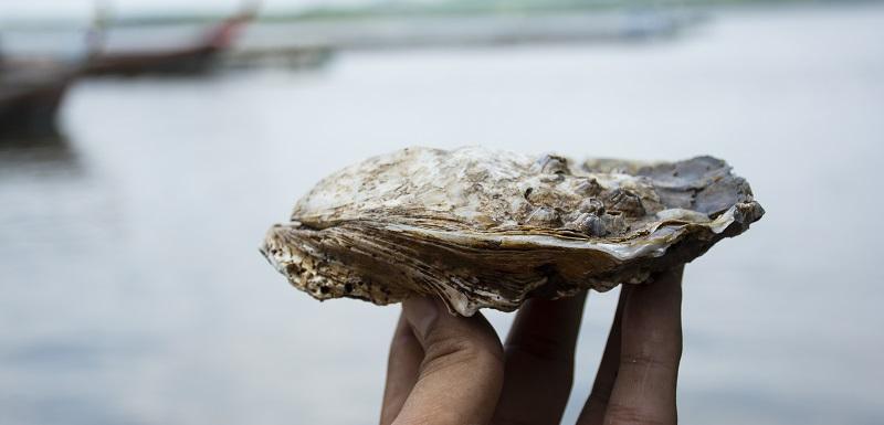 Comment éviter de contracter le virus de la gastro-entérite en mangeant des huîtres
