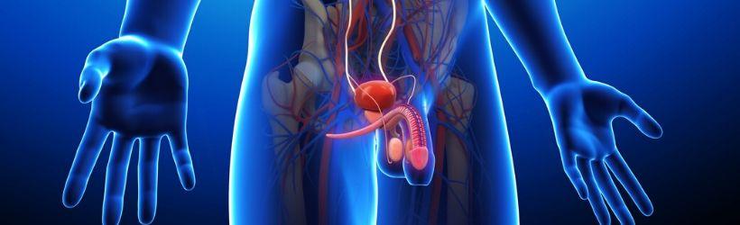 uretrocystographie-radio-vessie--uretre